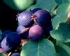 Loveberry3